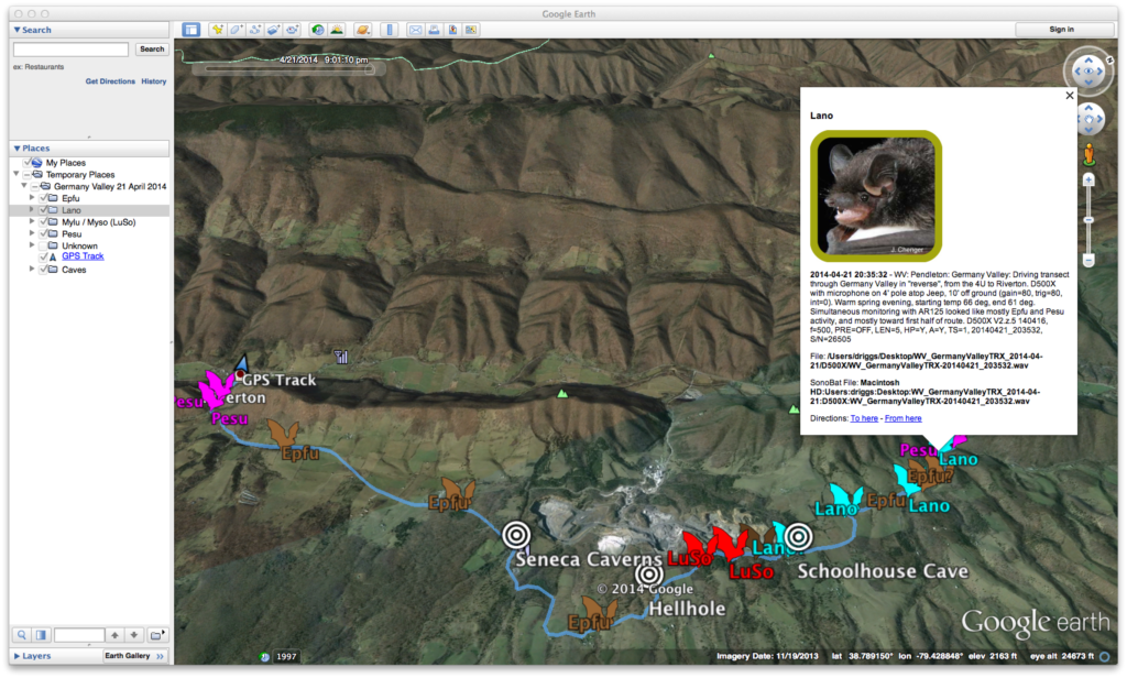 Example of a mobile transect processed by Myotisoft Transect, and viewed / styled within Google Earth.